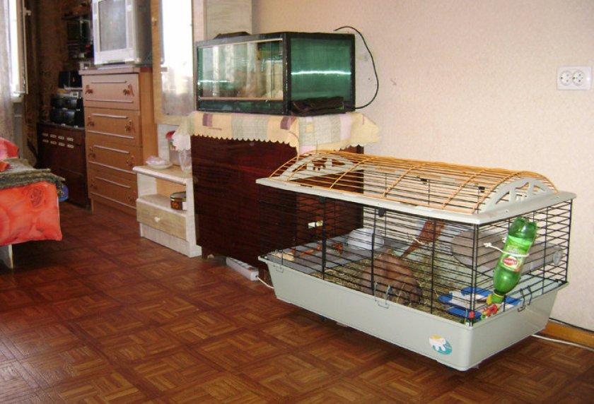 Место для кролика в доме
