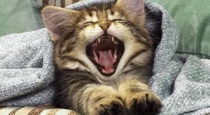 Причины и последствия, почему чихает кошка