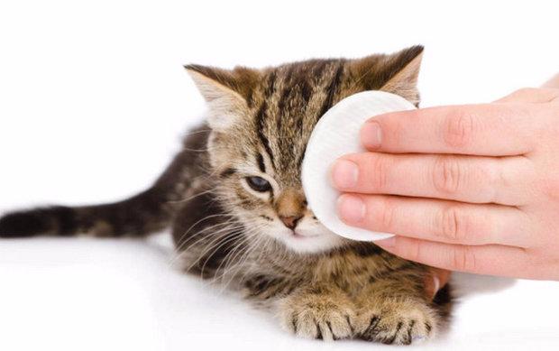 Насморк у кошек: лечение в домашних условиях - Ветеринар Гид 35