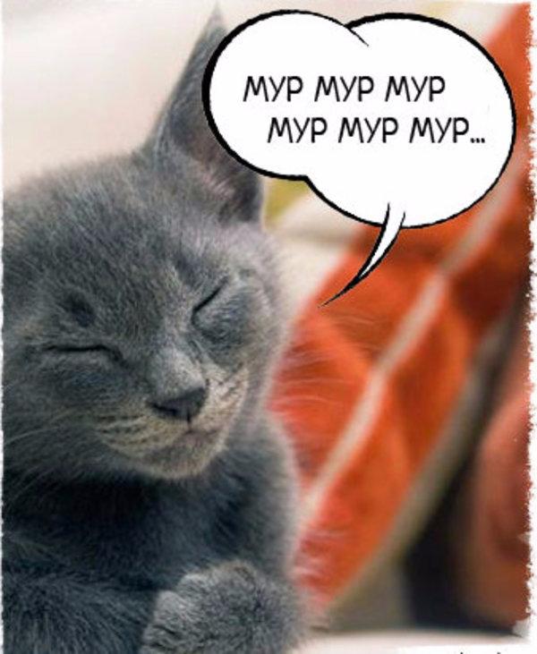 повысить картинки кошек мур алтая привлекательна большим