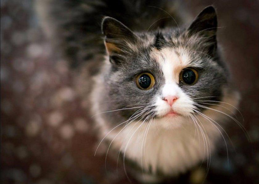 мяуканья кошек