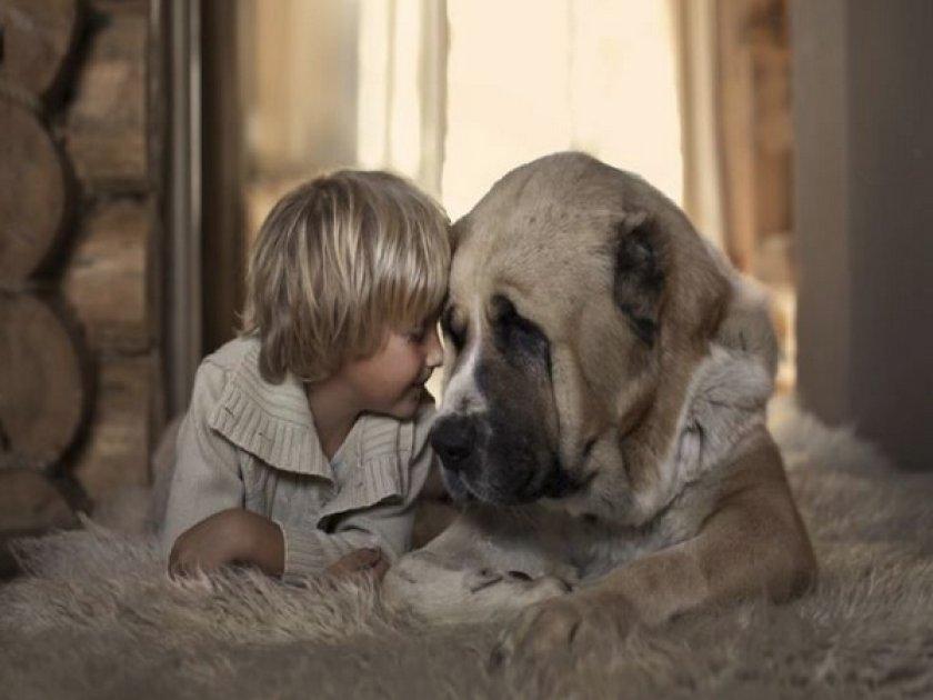 Ребенок с большой собакой