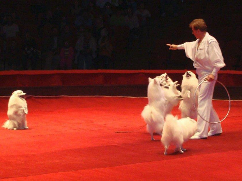 Дрессировщики в цирке с собаками