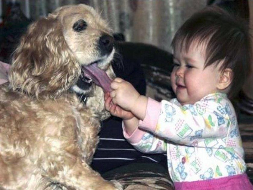 Собака и ребенок