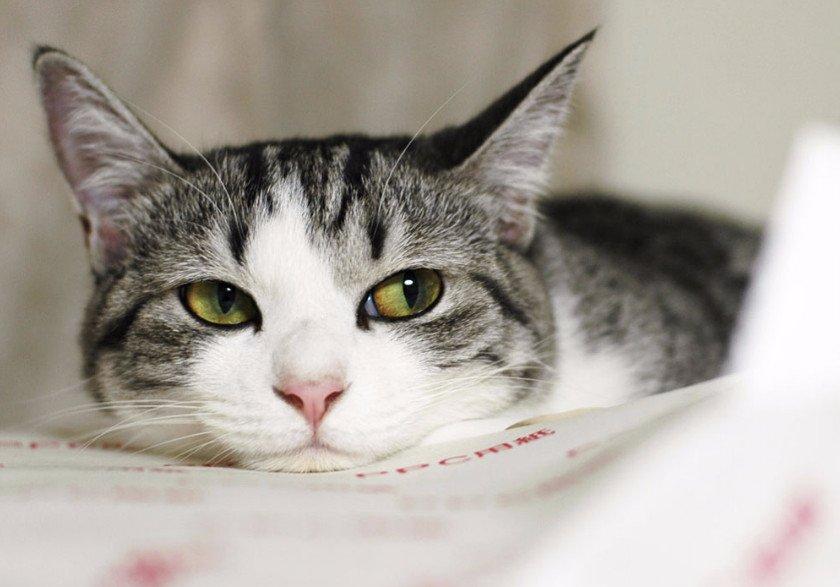 Бактериальные болезни кошек
