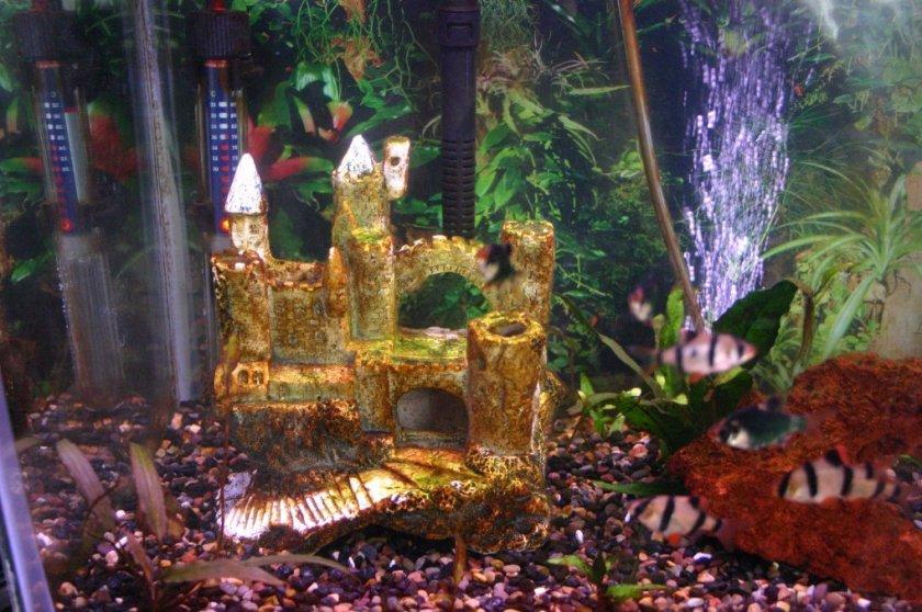 правило без бурая водоросль в аквариуме фото протекает основе