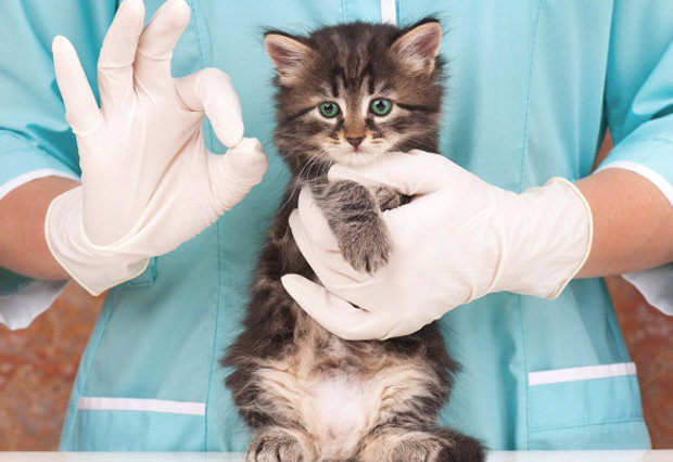 болезни глаз у котов третье веко лечение