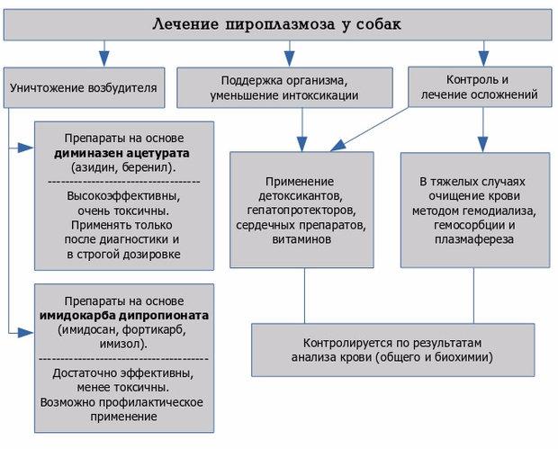 Схема лечения пироплазмоза у собак