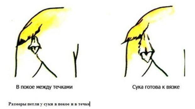 obilnaya-techka