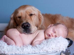 самые добрые домашние собаки