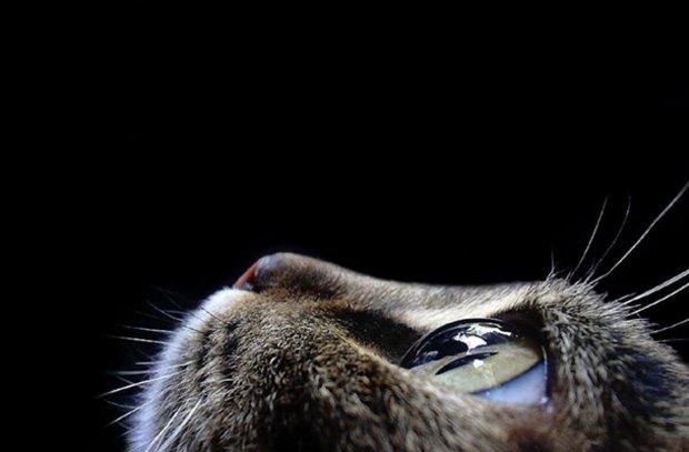 хорошо ли видят кошки