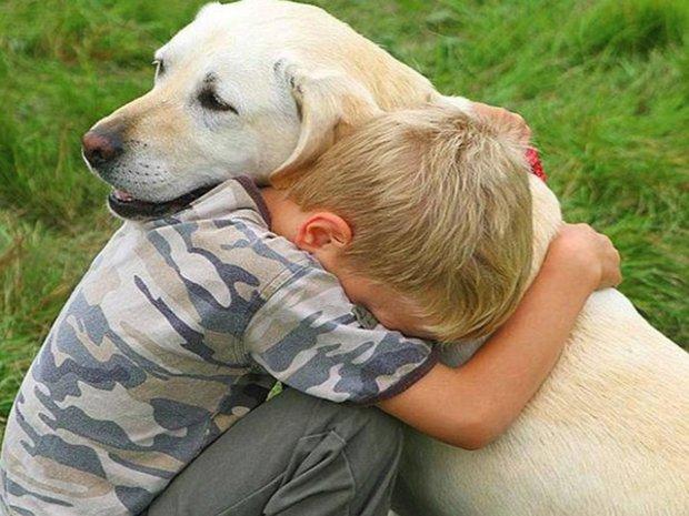 Дизплазия тазобедренного сустава как понять что нужно умертвлять собаку лечение ложного сустава бедра