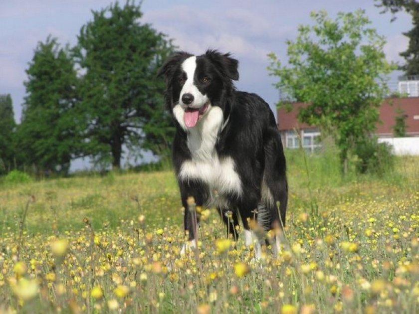 Собака от 5 до 40 кг