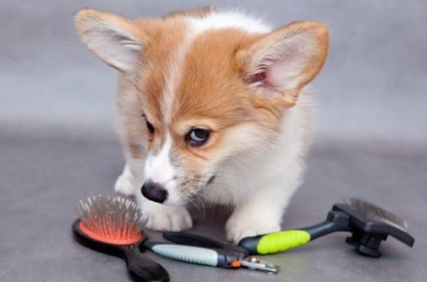Вычесывание блох у собаки