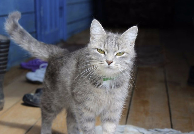 Инъекции для кошек для суставов суставные и мышечные боли при эндометриозе