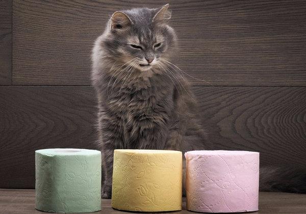 Понос у кота (диарея): ищем причины расстройства и подбираем правильное лечение