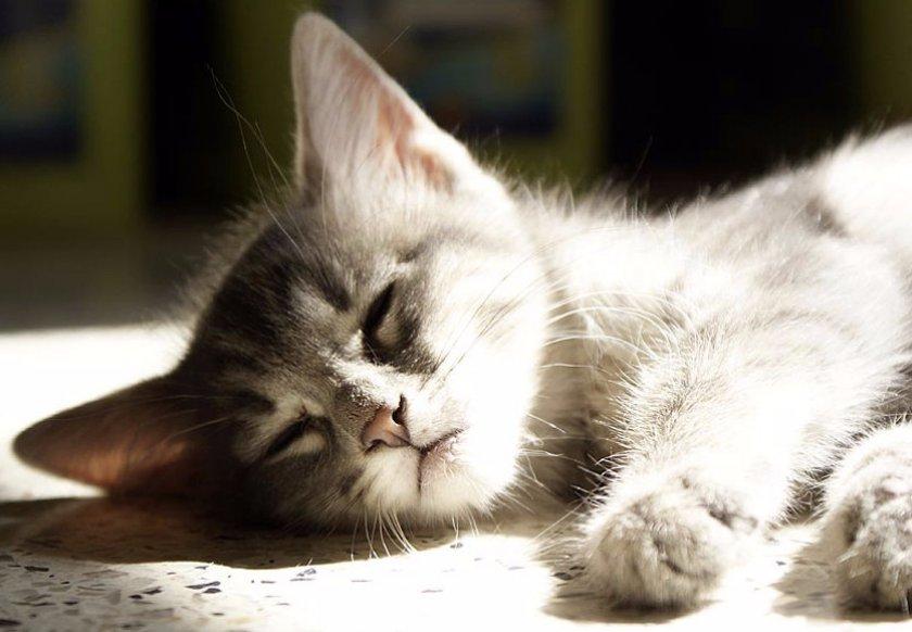 Болезни кошек