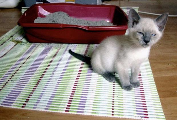 Понос у кошки причины и лечение в домашних условиях 92
