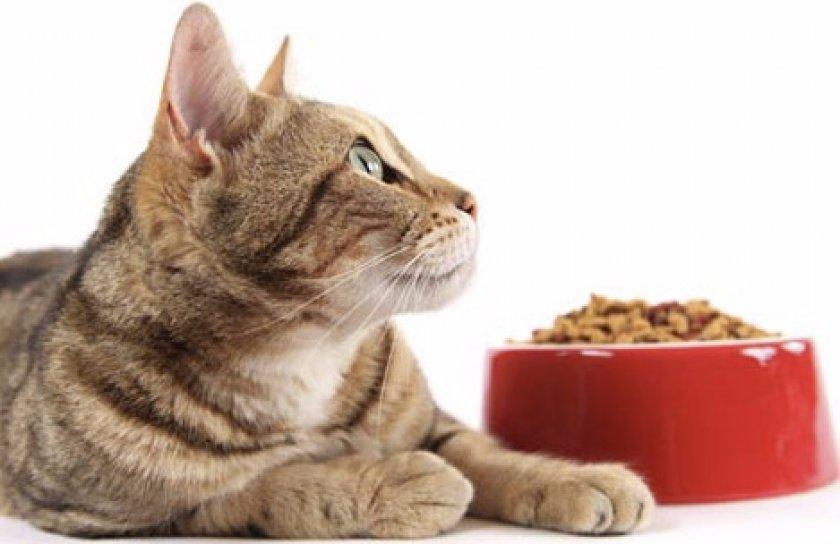 Рацион кошки