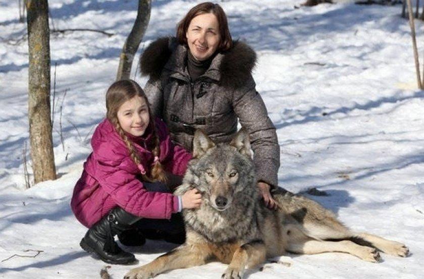 Волк и люди