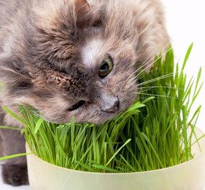 Какие лучше витамины для кошек