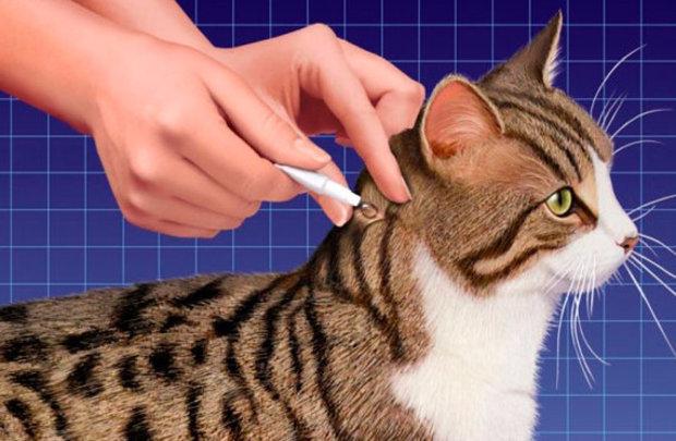 стронгхолд применение для кошек