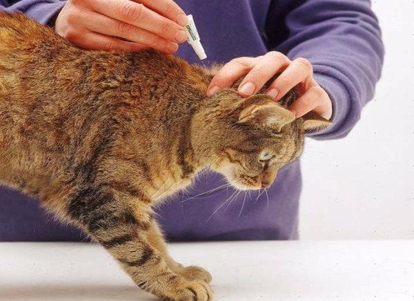Как правильно применять и какие выбрать капли от блох для котят?