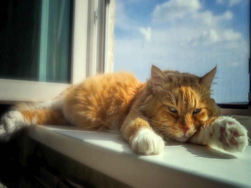 Кот в жаркую погоду