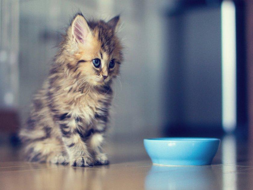 Маленький котенок не ест
