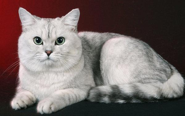 Отсутствие аппетита у котов кот не ест или есть мало