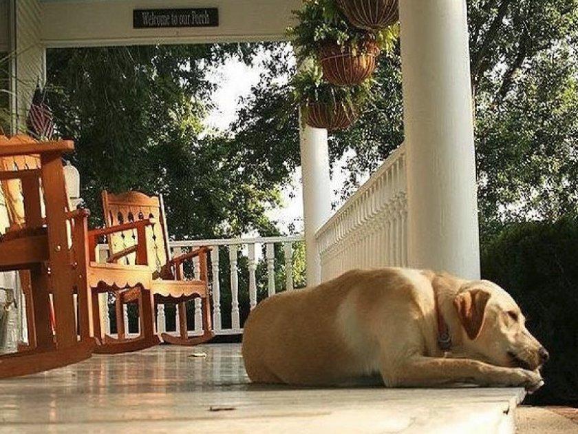 Собака скулит от боли
