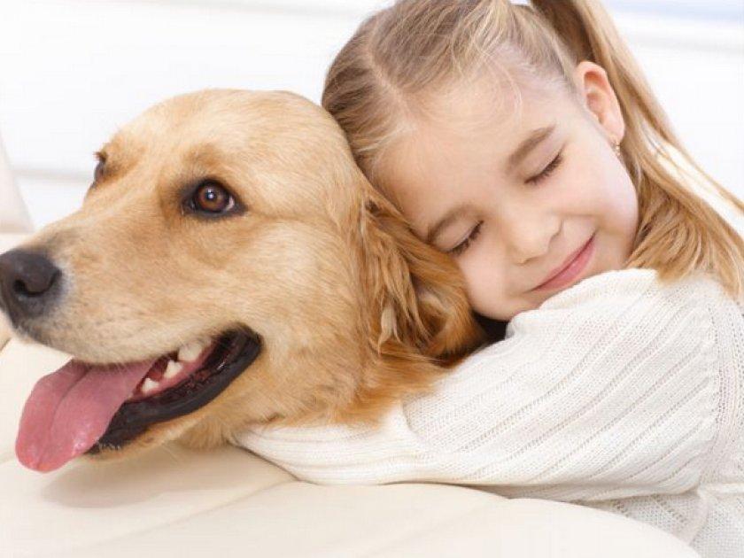 Терапия собаки
