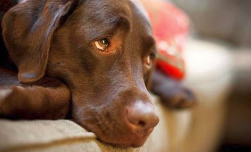 Как наносить крем собакам: инструкция