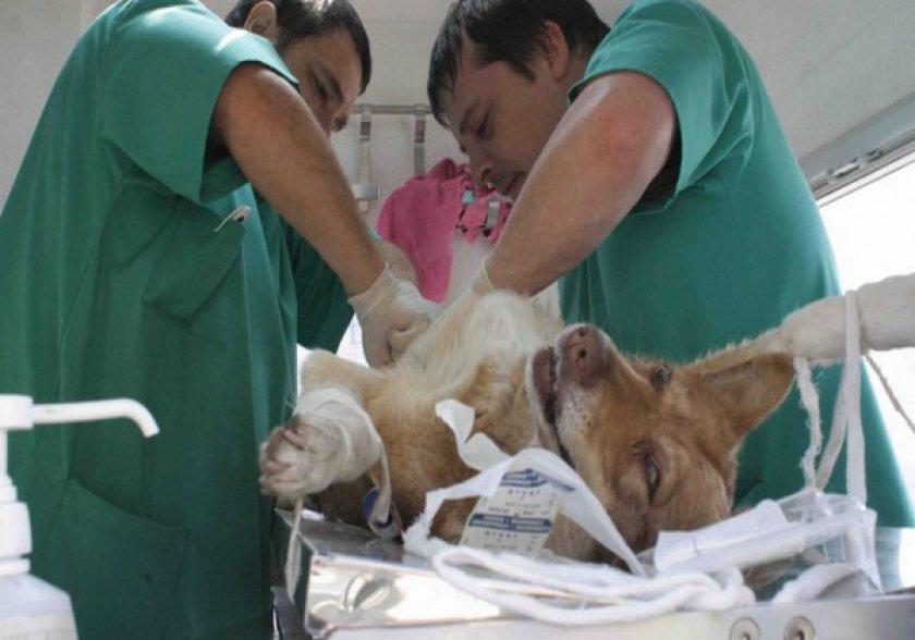 Операция собаки