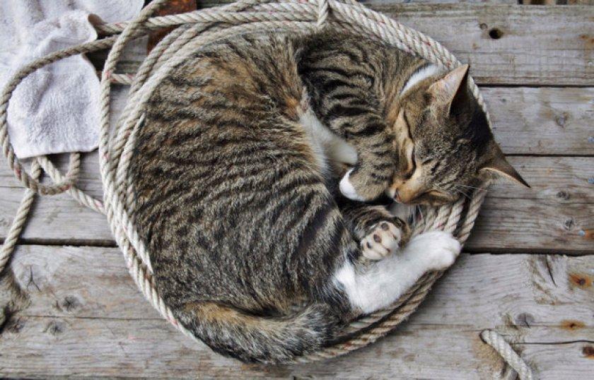 Полосатый кот: характер, породы и народные приметы | 538x840