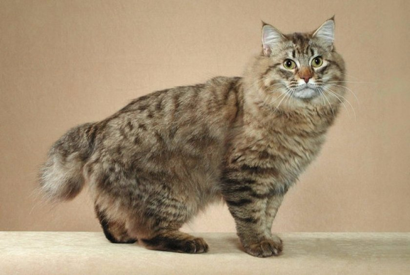 Полосатые Кошки Фото | 563x840