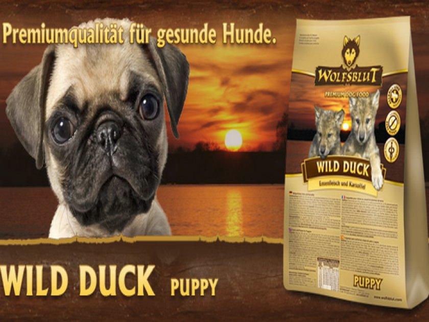 «Wild Duck Puppy»