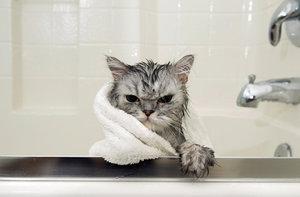 Искупайте своего котенка спокойно: правила и полезные рекомендации