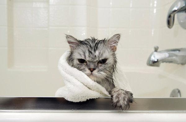 Как купать кошку и полезны ли водные процедуры для питомцев
