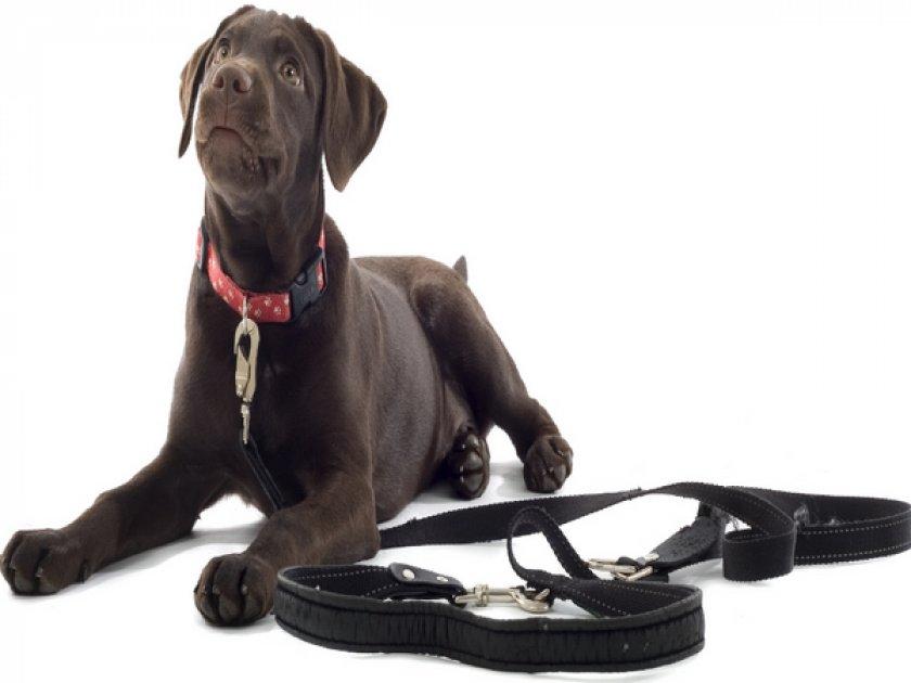 Ошейник и поводка для собаки