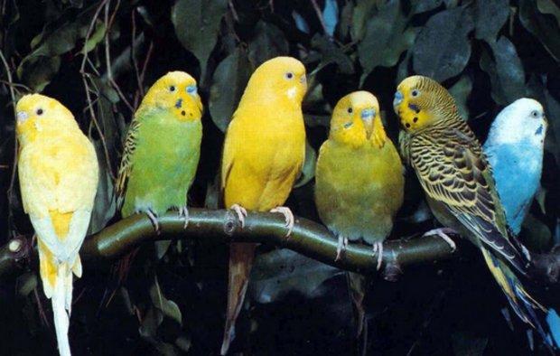 как наладить отношения с попугаем
