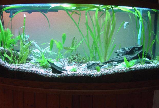 Как правильно оборудовать аквариум для рыбок