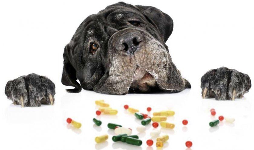 Собака и медикаменты