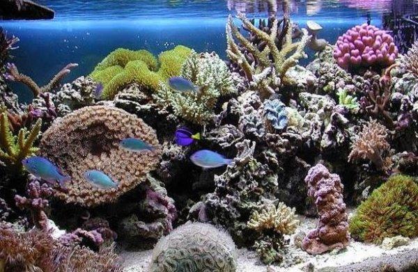 Как ухаживать за морским аквариумом