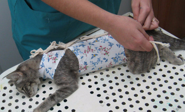 Кастрация котов своими руками 91