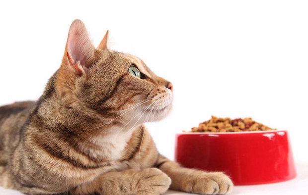 Как выбрать корм для кошек: советы экспертов. Лучший влажный корм для кошек