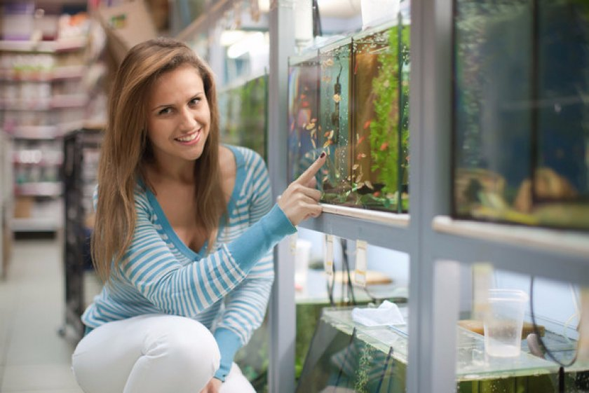 Проверка и подготовка аквариума