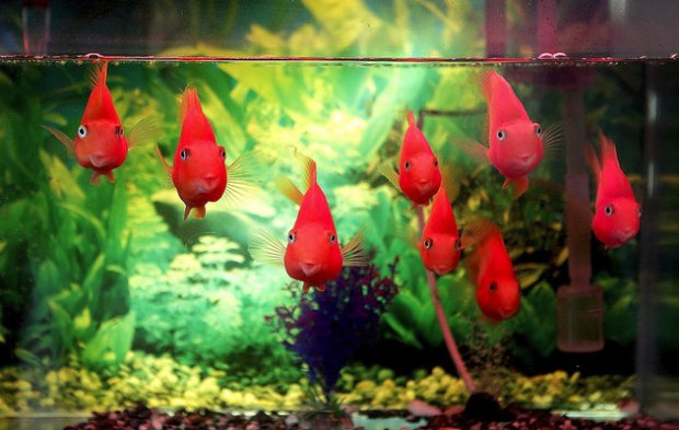 Заселение рыбок