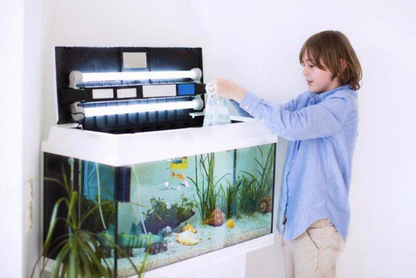 Уход за рыбками для начинающих
