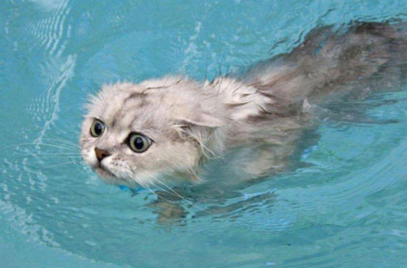 Кошка плавает